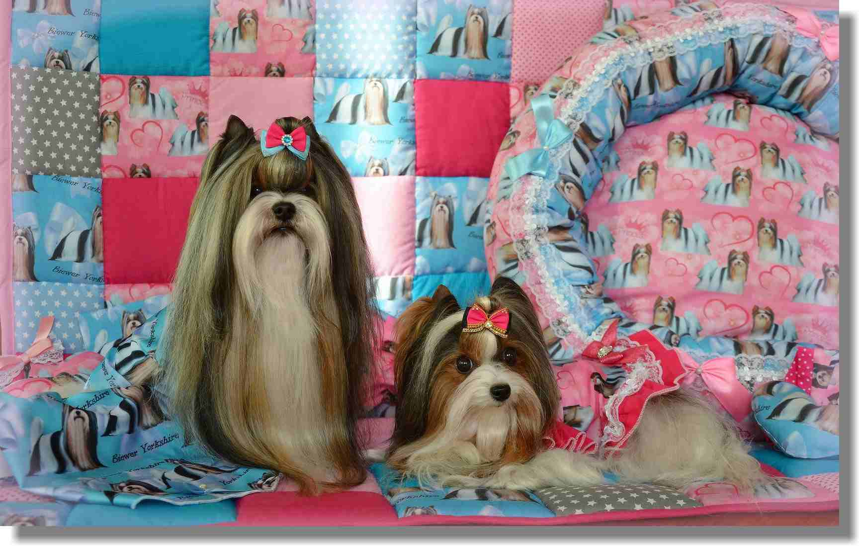 Deborah´s Magic Kennel ® - Beauty Bows - mašličky pro psy