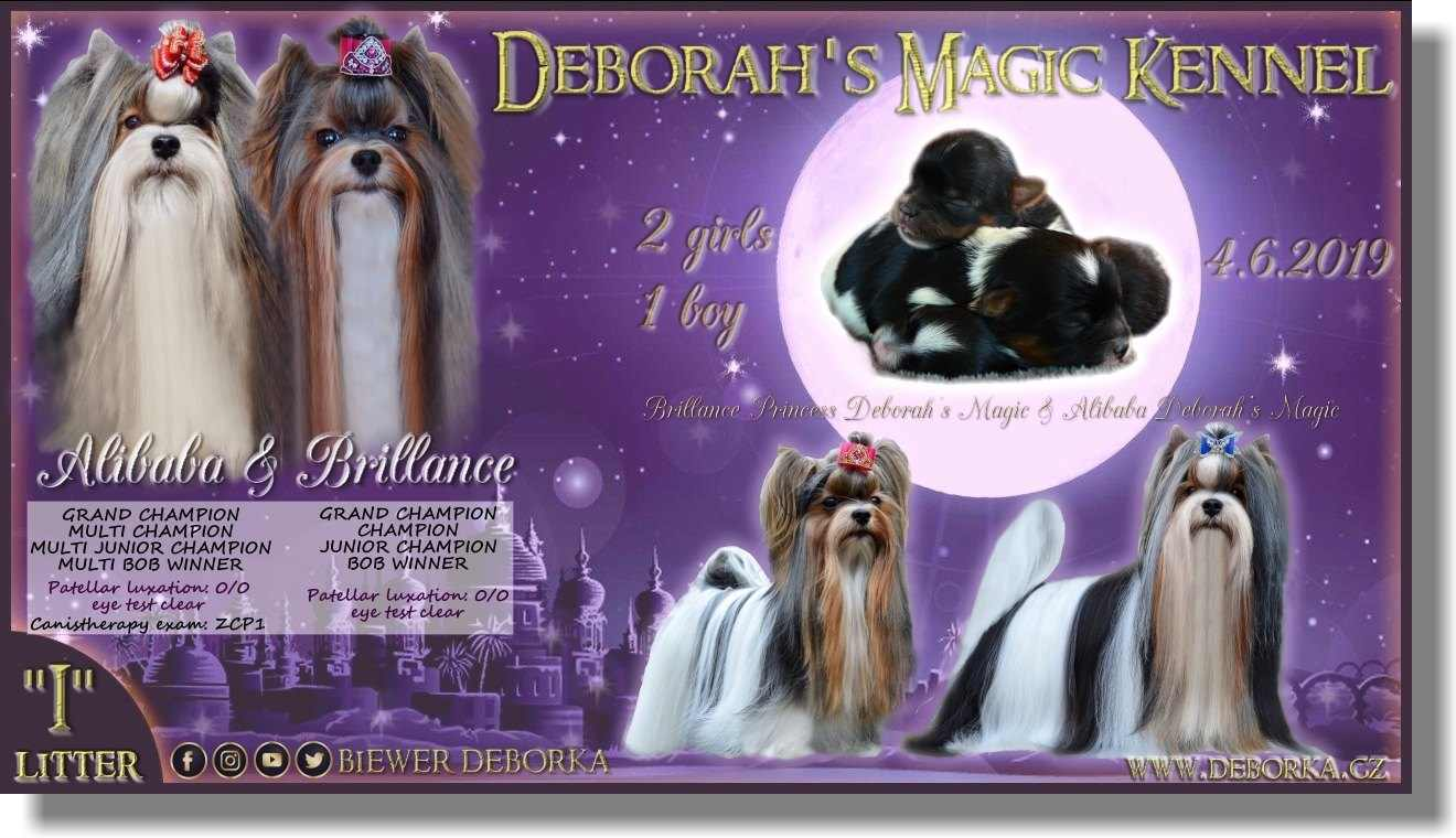 "Litter  ""I"" - Deborah´s Magic Kennel ®"