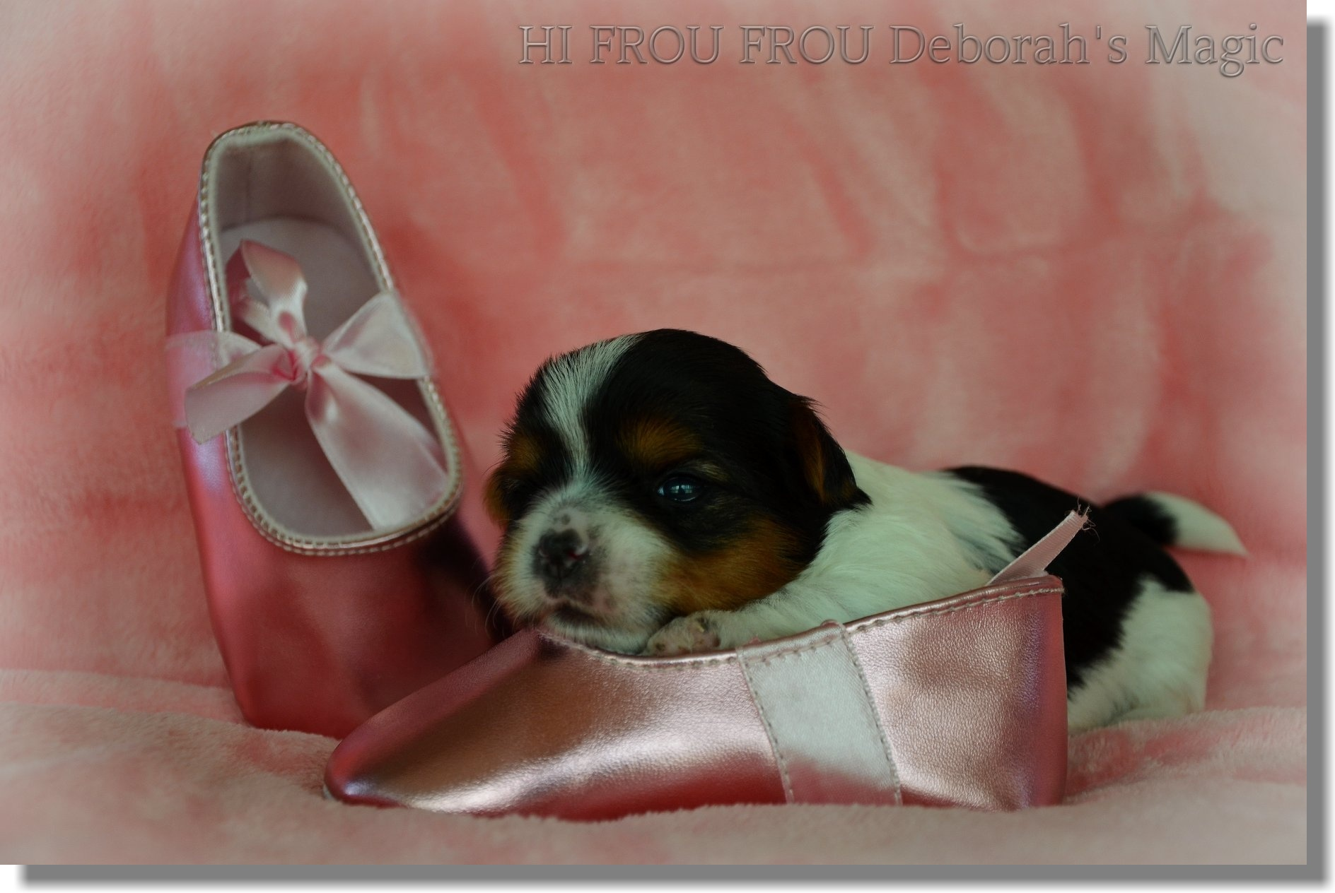 Hi Frou Frou Deborah´s Magic