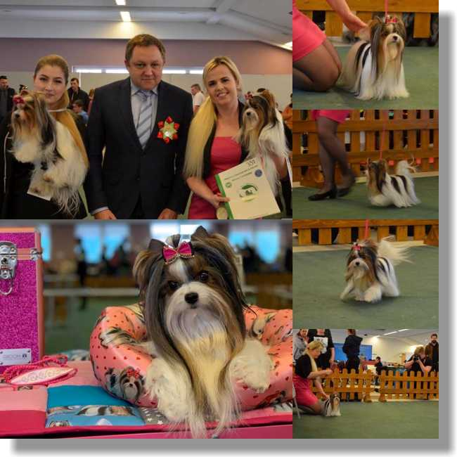 National Dog Show Zakrzów 17. 03. 2019 Judge: Paweł Osak(PL) Excellent 1, CAC and BEST OF BREED!